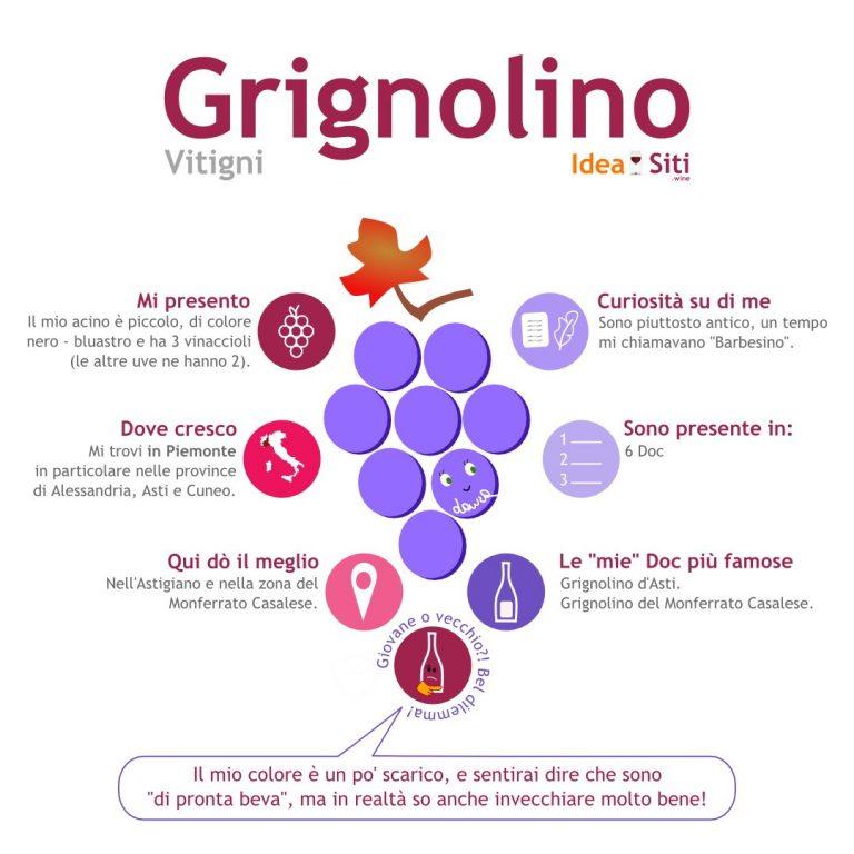 infografica sul vitigno Grignolino